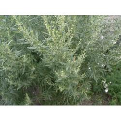 Натуральный экстракт полыни (Worm Wood Extract) 42